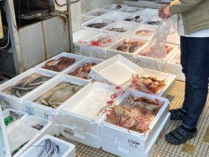 英会話Oneのそばの大平鮮魚店の魚