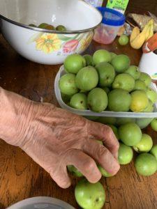 ・梅を仕分けるおばあちゃん